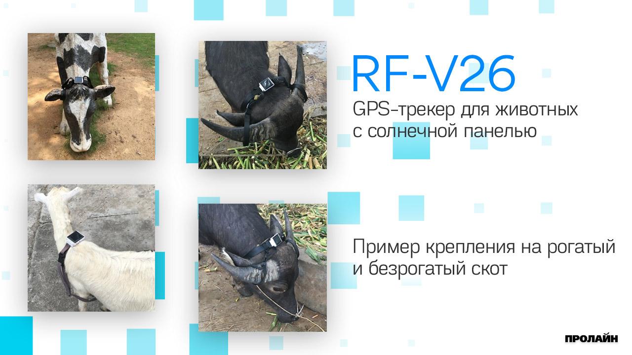 GPS-трекер для животных с солнечной панелью RF-V26