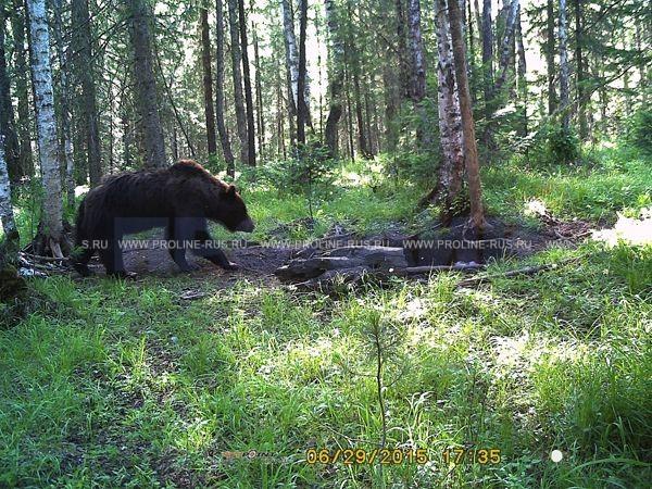 Уличная 3G/GSM/MMS камера HC-350G медведь